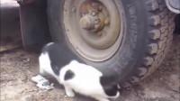 老鼠:我承认我有赌的成分,猫咪:可惜你输了