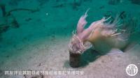 你见过怎么神奇生物?会在海里游泳的小兔子,是不是很可爱