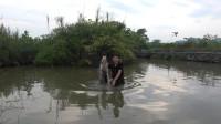 小莫看到水面有波动,撒一网下去全是大鱼,太给力了