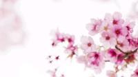 《春暖花开向未来》——建行阜新分行