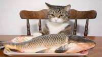 为什么猫咪吃鱼从来不怕卡刺?镜头放慢50倍,看完解开多年疑虑