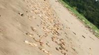 现场!东莞海滩惊现大量猪蹄腐臭味明显重量超20吨 当地部门已介入