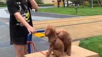 狗狗陪着取快递是幸福还是不幸?