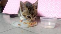 我家附近的流浪猫2-吧唧吧唧吃猫粮