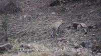 豹子头在水边饮水也是小心翼翼,害怕被突然袭击眼观四路