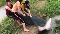 捕鱼:这条鱼劲真大!几个美女齐力才将它拿下,看似要成精了吧?