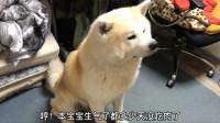 秋田犬半夜找主人,一声不吭就盯着女主,都几天没吃肉了啊
