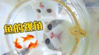 用鱼的视角去看猫会怎么样?水下看猫原来是这样子!