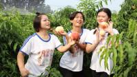 短剧:摘桃1:妈妈带伙伴去摘桃子,伙伴们到了桃园像放飞的小鸟