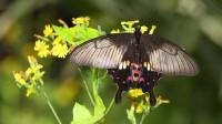 十二星座小公主变身唯美蝴蝶,巨蟹座最好看!