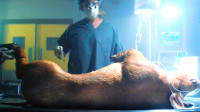 为了拯救绝症妻子,科学家把母猪器官移植到她体内,让她获得永生
