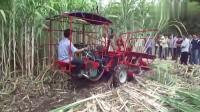 牛人发明的新型甘蔗收割机,真是够实用的,这下农民有福了!