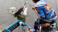 小清河野坑钓鱼
