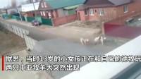 德国牧羊犬为保护13岁小主人勇斗两凶猛大狗,不幸丧命