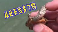 乌龟:长这么大 第一次有人拿我打水漂
