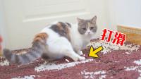 猫咪脚滑瞬间有多搞笑?4只爪子也会翻车!