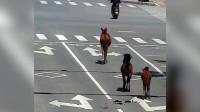 """三匹马""""无牌照""""上路还知道看路标,网友:这是""""马路""""没毛病。"""