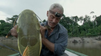 澳洲人形牙齿食肉鱼,专业要人蛋蛋,享有切球器的绰号!