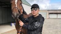 于谦晒喂马遛马动态 承包4万平米马场为宠物年烧百万
