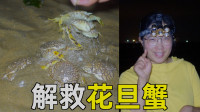 凌晨大退潮!大梅赶海拉出废弃渔网,成功解救花旦蟹