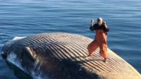 都说去世的鲸鱼不能碰,男子作死爬上去跳舞,可惜帅不过三秒
