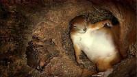 在松鼠窝里安装个摄像头,看看松鼠这一天,都在窝里干点啥?