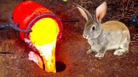老外将1200℃岩浆倒入兔子洞,挖上来一看,竟收获一件艺术品!