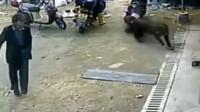 调皮老人戏弄藏獒犬,没想到意外瞬间发生,监控拍下惊险一幕!