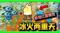 当冰碗豆冲过火焰后,真正的冰火两重天出现了!植物大战僵尸beta版#8