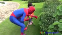 蜘蛛侠:蜘蛛侠和小朋友摘秋天的蔬菜