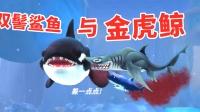 疯狂鲨鱼超级出击:无沟双髻鲨鱼巧遇金虎鲸