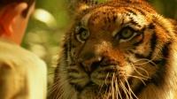 小男孩养了一只老虎当宠物,就和亲人一样!