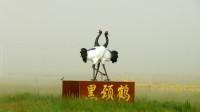 黄南州河南县蒙旗大草原(3)歌曲-北方飞来的黑颈鹤