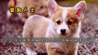 真实故事改编,爱狗人士与狗贩的温情故事