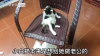 一时冲动养太多猫了怎么办?如何让猫在家里和平相处?看完涨知识