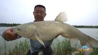 《游钓中国6》第18集 太白湖前一线牵 芦花流水草鱼肥
