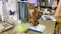 办公室里的猫咪,进入工作状态的速度太快了