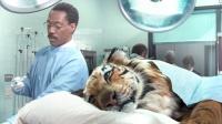 小伙可以听懂兽语,所有动物都来找他看病,从此走上人生巅峰!