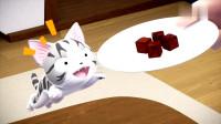 《甜甜私房猫》小奇,你喜欢吃巧克力吗