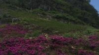 广西苍梧县石桥镇龙岩山旅游胜地欢迎您2020年9月21日