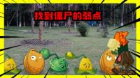 植物大战僵尸真人:明哥找到熊猫玩偶僵尸的弱点