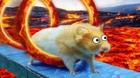 小仓鼠误闯熔岩迷宫,生死之际它能否逃出生天?全程超刺激!