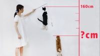 猫咪跳高大赛!短腿猫VS田园猫,没有对比就没有伤害!