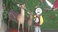 小学生拔标本鹿角给爷爷补身体:以为是鹿茸