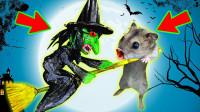 小仓鼠勇闯万圣迷宫,不料被黑暗女巫绑走,它能成功逃脱吗?