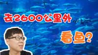 三郎的日常VLOG:飞2600公里到三亚,就是为了看条鱼?