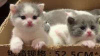 开始长大的小猫咪,对什么都好奇
