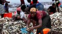 """非洲没人要的""""垃圾"""",却被中国游客疯抢,这究竟是怎么回事?"""