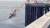 人们本想将海豹放生大海,不想这一放,竟直接送入鲨鱼口!