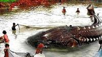 黑龙江渔民捕到中国最大淡水鱼,重达千斤,专家看后却给出警告